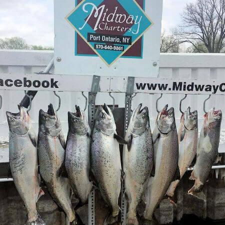limit of king salmon caught by group from Oswego NY